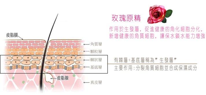 玫瑰原精皮膚作用