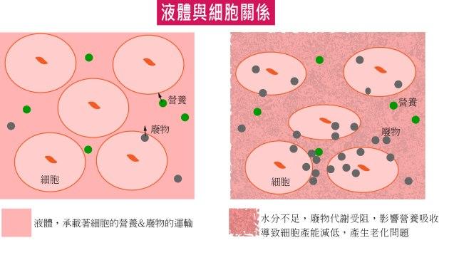 細胞與異體的關係-01